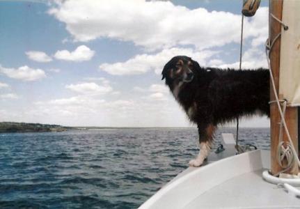 Dog sailing Maine